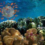 отели хургады с коралловым рифом